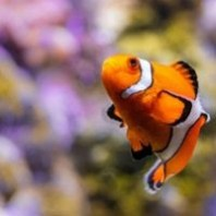 All Your Metadata Questions Answered: Tips from the National Aquarium